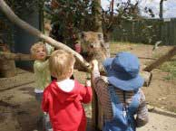 An excursion to ZooDoo Wildlife Park,image ©; Possums Playcentre